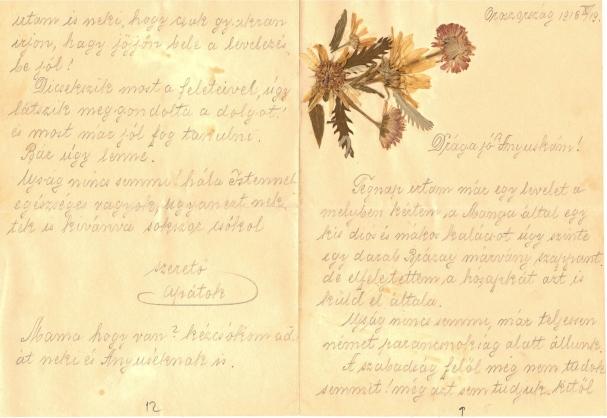 Egy katona tábori posta levelei préselt virágokkal díszítve feleségéhez és gyermekeihez az orosz frontról, 1915–1916. Jelzet: MNL OL R 385 – No. 76.